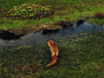 Foto van vos van pien slooter