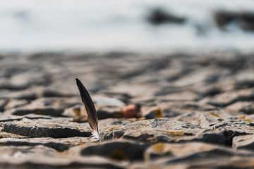 Fähre zwischen Felsen am Strand von Steven Dijkshoorn