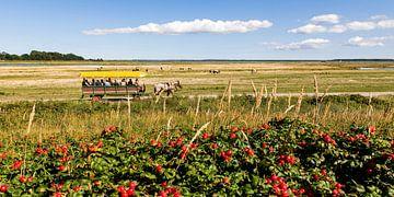 Pferdekutsche auf der Insel Hiddensee von Werner Dieterich