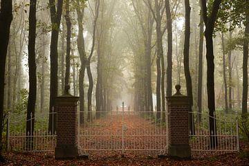 Een oprijlaan op een mistige ochtend in de herfst. van Coos Photography