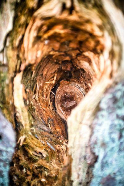 Vogelnest in dode berk van Fotografiecor .nl