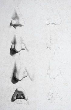 Alte Studie und Skizzen von verschiedenen Nasen auf einem Gesicht in schwarz-weiß von Henk Vrieselaar