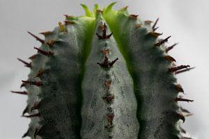 Cactus van
