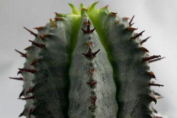 Les Cactus sur Kimberly Zanting