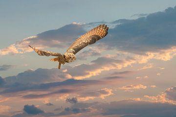 Ein Uhu fliegt mit ausgebreiteten Flügeln gegen einen hellen farbigen Himmel. farbigen Himmel. von Gea Veenstra
