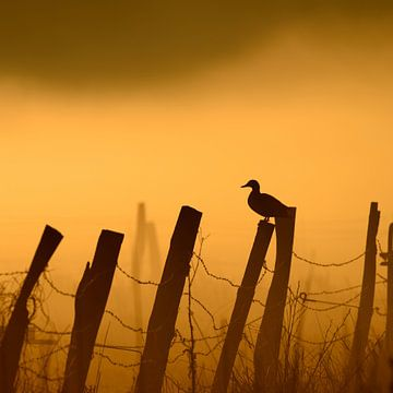 Ente im Nebel von Lars Tuchel