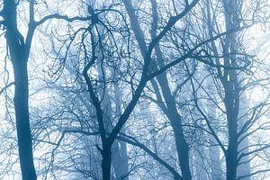 Bomen in mistig bos van