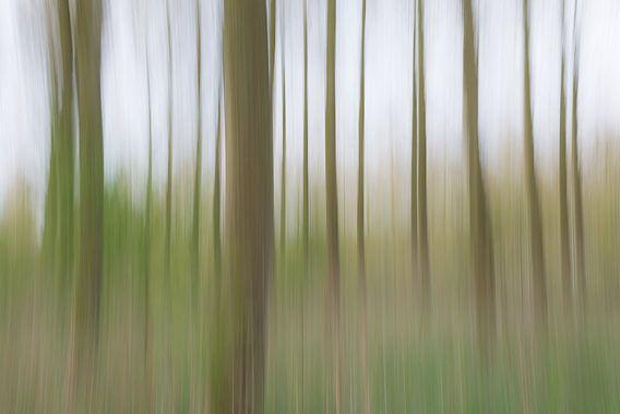moving trees van Jaco Verheul