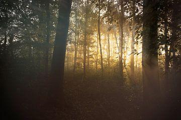licht in het bos van Karin vanBijleveltFotografie