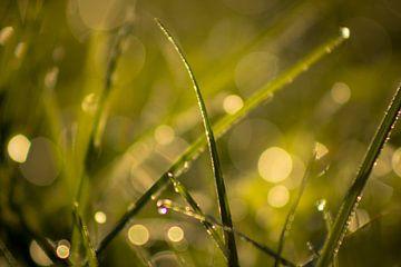 Dauw op het gras van Ron de Jong