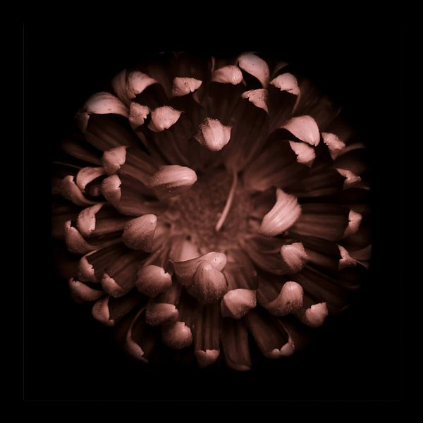Chrysant in het donker vierkant van bird bee flower and tree