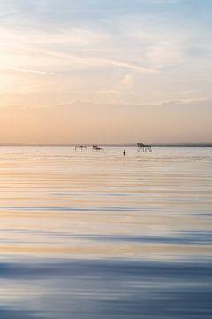 Abends schwimmen spazieren im Balaton zum Sonnenuntergang mit ruhigem Wasser
