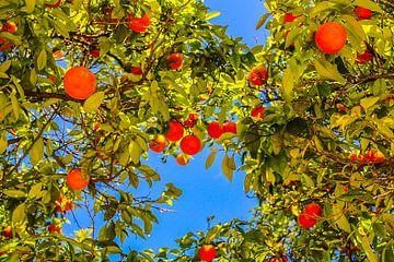 Mandarines à Valence sur