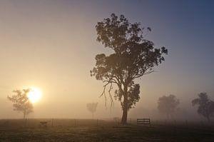 Vroeg in de ochtend op de Garrawilla boerderij