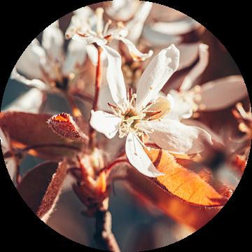 Appelbloesem van Leonie Wagenaar