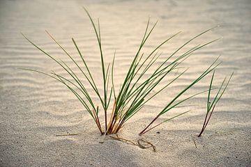 Helmgras in het zand van Jenco van Zalk