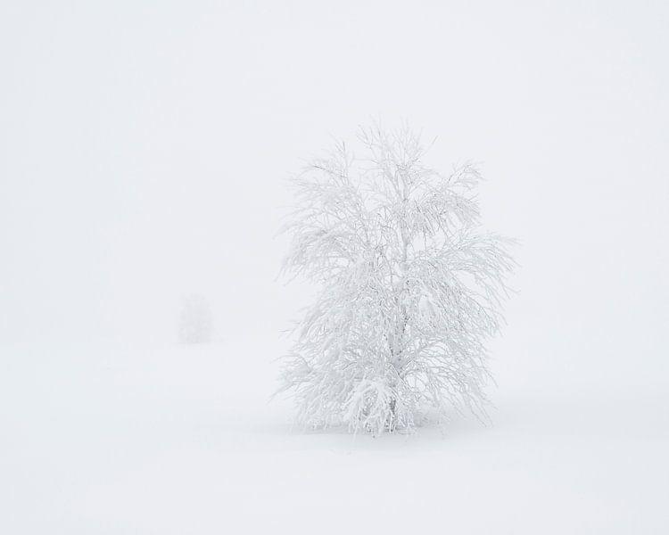 Bevroren Bomen van Raoul Baart