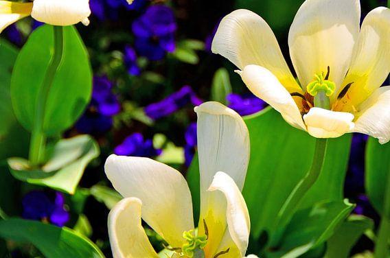 Farbe Explosion Blumenbeet