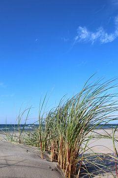 Düne van Ostsee Bilder