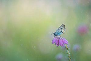 Vlinder in de regen.
