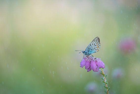 Vlinder in de regen. van Francis Dost
