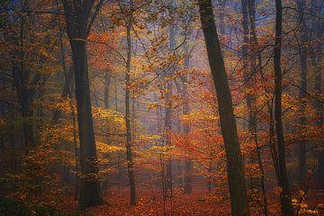 Traumwald. Hintergrundbild . von Saskia Dingemans