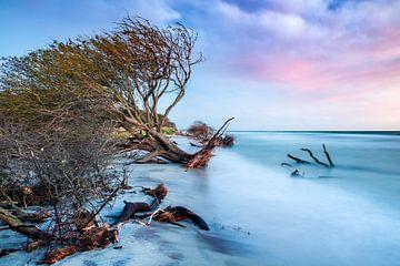 Ostseeküste auf dem Darß von Sascha Kilmer