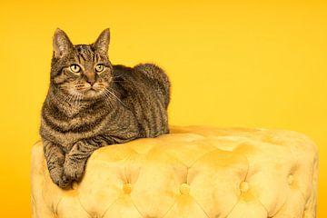 Tabby kat liggend op een gele poef in een gele achtergrond van Leoniek van der Vliet