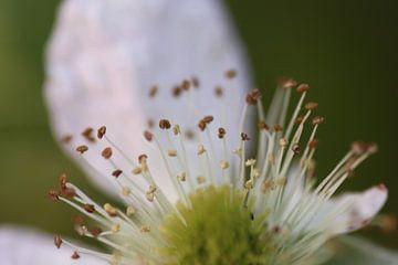 Bloesem op lente dagen van Ruud Wijnands
