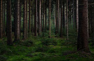 Herfstlicht in het bos (2) van Bo Scheeringa Photography