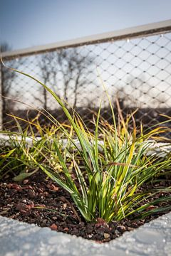 Gras van Jasper Scheffers