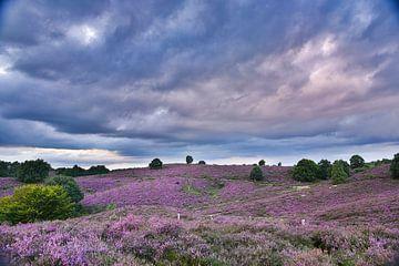 Heide-Landschaft von Joop Bruurs