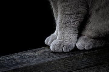 Katzenpfoten von Jefra Creations