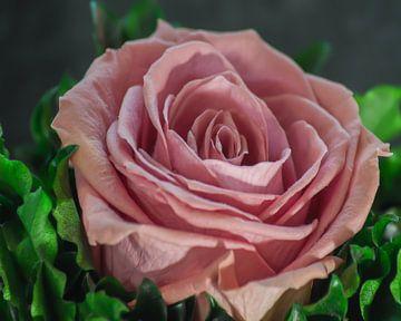 Pink Rose van Michael Nägele