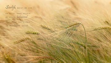 Buigzame gerst (2) van Beeld en Poëzie