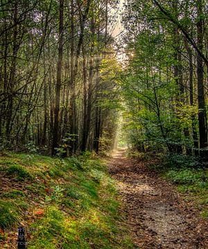 Waldweg in der Morgensonne von Robin Pics (verliefd op Utrecht)