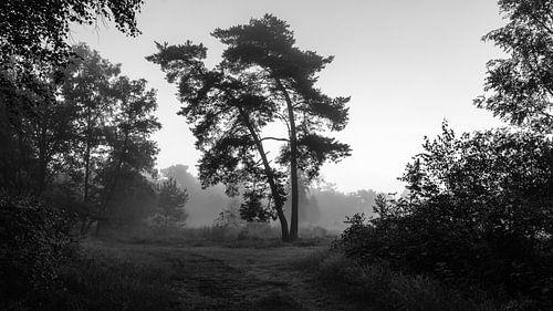 Misty Twilight Silhouette Trees (B&W) van William Mevissen