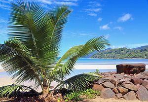 Traumhafter Strand mit Palme auf den Seychellen