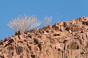 Struik op rotsen von Nico van Velden