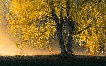 Morgennebel im Herbst von Ronny Rohloff