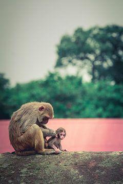 Affenfamilie von Edgar Bonnet-behar