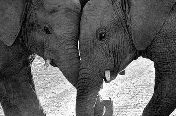 Stoeiende olifantjes. van