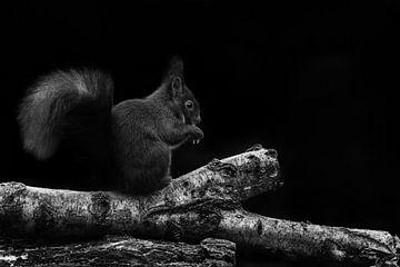 Eekhoorn von Cor Pot