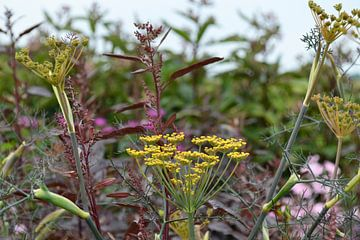Plantencombinatie in natuurlijke tuin von Susan Dekker