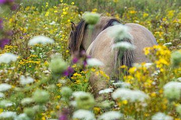 Hengst tussen de bloemen von Fokko Erhart