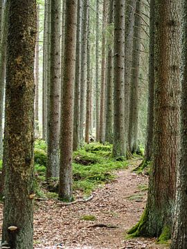 La forêt des contes de fées sur Loes
