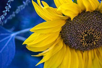 Sonnenblumenmakro Makro von Scarlett van Kakerken