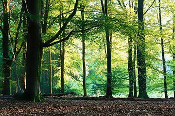 Licht in het bos van Rigo Meens