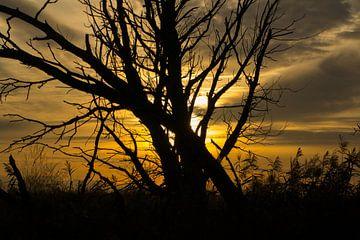 Zonsondergang met boom bij Oostvaardersplassen van Tim Groeneveld