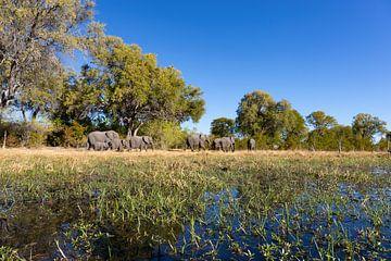 Okavango-Delta von GoWildGoNaturepictures